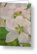 Apple Blossoms Greeting Card by Sharon E Allen