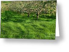 Apple Orchard Greeting Card by Sandra Cunningham