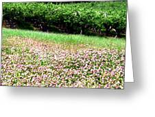 Apple Trees And Clover Greeting Card by Will Borden
