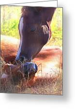 Arabian Foals - Peaceful Greeting Card by ELA-EquusArt