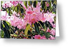 Arboretum Rhododendrons Greeting Card by David Lloyd Glover