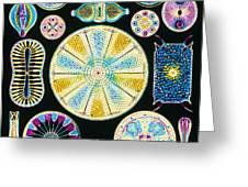 Art Of Diatom Algae (from Ernst Haeckel) Greeting Card by Mehau Kulyk