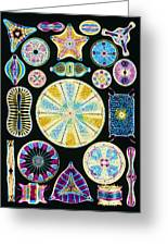Art Of Diatom Algae (from Ernst Haeckel) Greeting Card by Mehau Kulyk