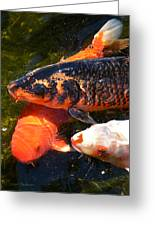 Three Koi Waiting Greeting Card by Susan Wiedmann