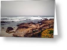 Asilomar Beach Pacific Grove Ca Usa Greeting Card by Joyce Dickens
