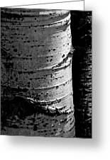 Aspen Abstract Greeting Card by The Forests Edge Photography - Diane Sandoval