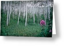 Aspen Grove Greeting Card by Rod Kaye