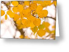 Aspen Leaves Greeting Card by James BO  Insogna