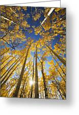 Aspen Tree Canopy 3 Greeting Card by Ron Dahlquist - Printscapes