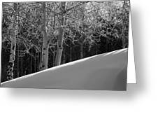 Aspencade Greeting Card by Skip Hunt
