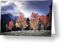 Aspens In Autumn Light Greeting Card by Leland D Howard