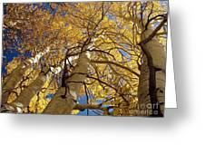 Aspen's Reaching  Greeting Card by Scott McGuire