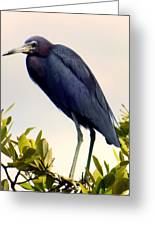 Audubon Blue Greeting Card by Karen Wiles