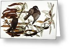 AUDUBON: CROW Greeting Card by Granger