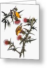 Audubon: Goldfinch Greeting Card by Granger