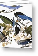Audubon: Jay And Magpie Greeting Card by Granger