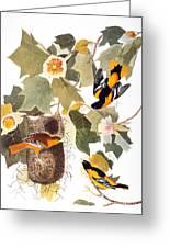 Audubon: Oriole Greeting Card by Granger