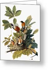 Audubon: Robin Greeting Card by Granger