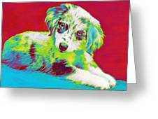 Aussie Puppy Greeting Card by Jane Schnetlage