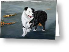 Australian Shepard Border Collie Greeting Card by Enzie Shahmiri