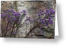 Autumn Asters Greeting Card by Randy Bodkins