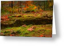 Autumn Colors Greeting Card by Ryan Heffron