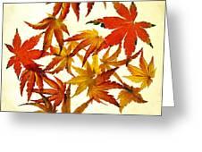 Autumn Flury Greeting Card by Rebecca Cozart