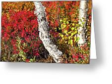 Autumn Foliage In Finland Greeting Card by Heiko Koehrer-Wagner