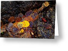 Autumn Jewels.. Greeting Card by Al  Swasey