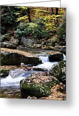 Autumn Rushing Mountain Stream Greeting Card by Thomas R Fletcher