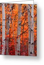 Autumn Splendor Greeting Card by Don Schwartz