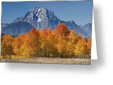 Autumn Splendor In Grand Teton Greeting Card by Sandra Bronstein