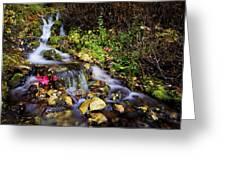 Autumn Stream Greeting Card by Chad Dutson