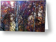Autumn Sunlight Greeting Card by Jane Schnetlage
