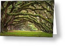 Avenue Of Oaks - Charleston Sc Plantation Live Oak Trees Forest Landscape Greeting Card by Dave Allen