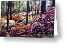 Azalea Forest Greeting Card by David Lloyd Glover