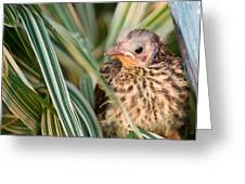 Baby Bird Peering Out Greeting Card by Douglas Barnett