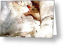 Baby Brushtail Possum 2 Greeting Card by Darren Stein