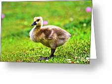 Baby Face Greeting Card by Scott Pellegrin