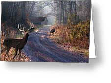 Back Home Greeting Card by Bill Stephens