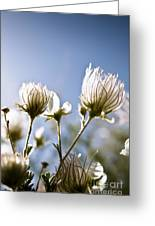 Backlit Fuzzy Flower Greeting Card by Ray Laskowitz - Printscapes