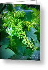 Backyard Garden Series - Young Grapes Greeting Card by Carol Groenen