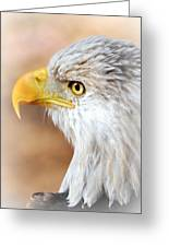 Bald Eagle 15 Greeting Card by Marty Koch