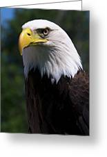 Bald Eagle Greeting Card by JT Lewis