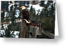 Baldy On A Post Greeting Card by Don Mann