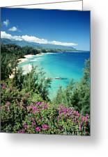 Bali Hai Beach Greeting Card by Dana Edmunds - Printscapes
