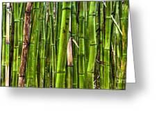 Bamboo Greeting Card by Dustin K Ryan