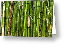 Bamboo Greeting Card by Dustin K Ryan