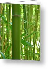 Bamboo Greeting Card by Rhianna Wurman