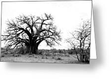 Baobab Landscape Greeting Card by Bruce J Robinson